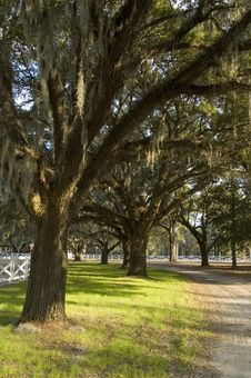 Free Country Lane Spanish Moss Stock Photos - 2246803