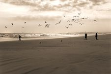 Free Boys And Birds Stock Photography - 2246992
