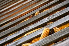 Free Corn In Barn Royalty Free Stock Photos - 2248008
