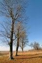 Free Tree In Autumn Royalty Free Stock Photo - 22403365