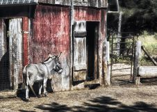 Free Donkey And Barn Royalty Free Stock Image - 22415246