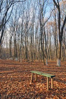 Free Evening Forest Bench Stock Photography - 22415442