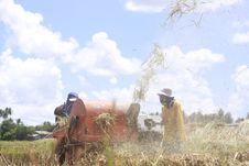 Free Rice Farming Royalty Free Stock Image - 22422486