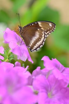 Free Blue Moon Butterfly Royalty Free Stock Images - 22423289