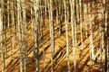 Free Forest In Autumn Royalty Free Stock Photography - 22430367