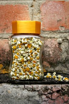 Free Camomile Flowers In Glass Jar Royalty Free Stock Photos - 22431418