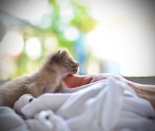 Free Cute Sleeping Kitten Cat Stock Photos - 22432943