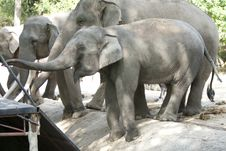 Free Elephant Stock Photo - 22437140