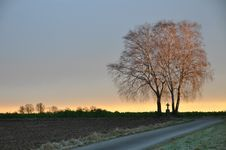 Free Lonesome Trees With Cross At Sunrise Stock Image - 22437991