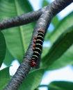 Free Caterpillar Stock Photo - 22448210