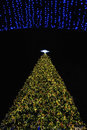 Free Big Christmas Tree In Good Time. Royalty Free Stock Photo - 22452385