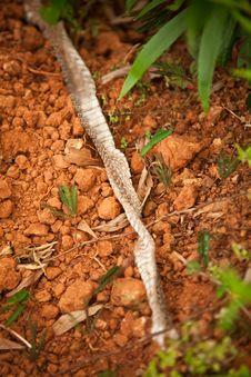 Free Snake Skin Stock Image - 22454811