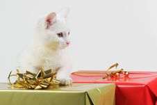Free Cat Playing With Gift Box Stock Image - 22465541