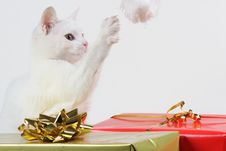 Free Kitten Playing With Santa Hat Stock Photography - 22465582