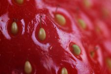 Free Macro With Red Fruit Stock Images - 22465654