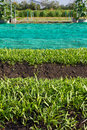 Free In The Vegetable Plots. Royalty Free Stock Image - 22477496