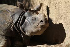 Free Rhinoceros Royalty Free Stock Photography - 22472427