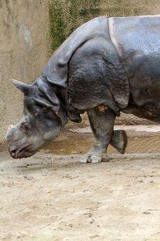 Free Rhinoceros Royalty Free Stock Photography - 22472497