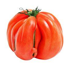 Free Tomato Royalty Free Stock Images - 22475919