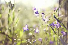 Free Bright Purple Flowers Royalty Free Stock Photo - 22476785