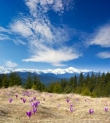 Spring Landscape With The Cloudy Sky And Flower Royalty Free Stock Photo