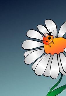 Free Camomile With Ladybug Stock Photos - 22479173