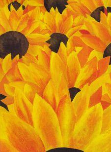Free Sunflowers Field Stock Image - 22480541