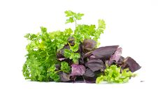 Free Salad Leaves Royalty Free Stock Photography - 22493887
