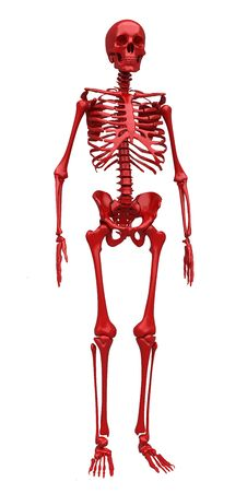Free Red Skeleton Stock Photography - 22494662