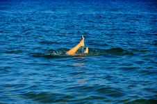 Free Feet Of The Young Woman In Water Stock Photos - 22495363