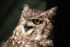 Free Eagle Owl Stock Photography - 22496222