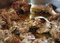 Free Heavy Meal Royalty Free Stock Photos - 2258448