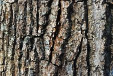 Free Grain Bark Texture Stock Photo - 2253180