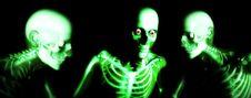 Free Human Bones Royalty Free Stock Photo - 2254795