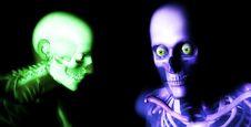 Free Human Bones 77 Royalty Free Stock Photos - 2254818