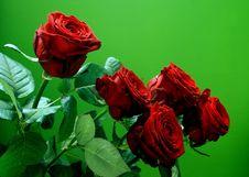 Free Red Rose Stock Image - 2255491