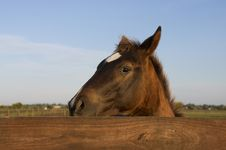 Free Cautious Horse Stock Images - 2255704