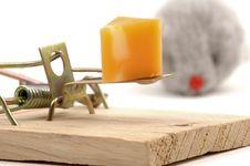 Free Mousetrap-Closeup Stock Photo - 2255960