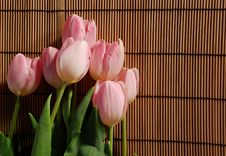Free Tulips Stock Image - 2256961