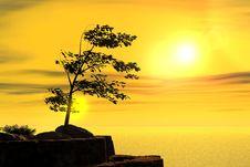 Free Tree Stock Image - 2256981