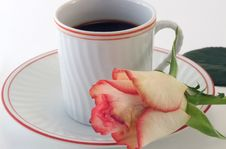 Coffee Hour With Rose Stock Image