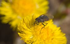 Free Pollen Royalty Free Stock Photo - 2257445
