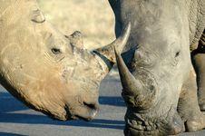 Free Rhinoceroses. Royalty Free Stock Image - 2257876