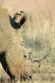 Free Rhinoceros. Royalty Free Stock Photo - 2257915
