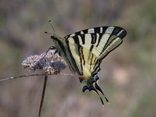 Free Butterfly Stock Photo - 2259660
