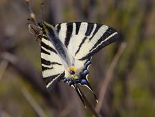 Free Butterfly Lepidopteron Stock Photos - 2259763