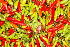 Free Green And Red Chili. Royalty Free Stock Photo - 22502475
