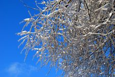 Free Sun Sparkled The Tree Branch In Ice Royalty Free Stock Photo - 22504035