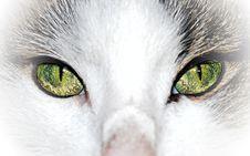 Free Green Eyed Cat Close Up Royalty Free Stock Photos - 22504228