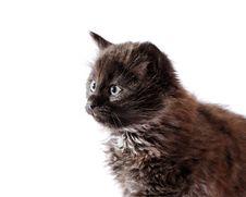 Free Kitten. Stock Photography - 22509652